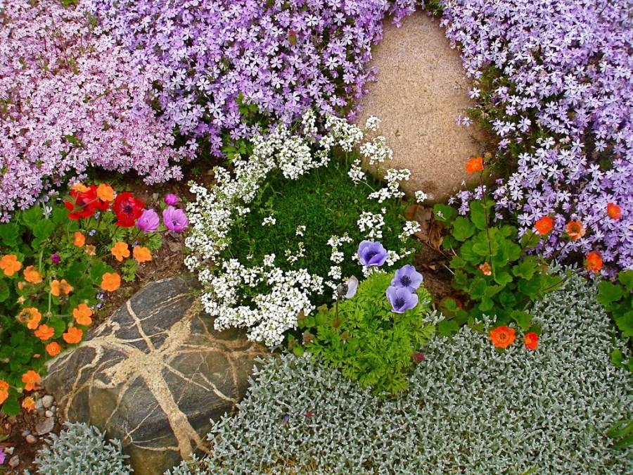 Стелющиеся цветы для альпийских горок