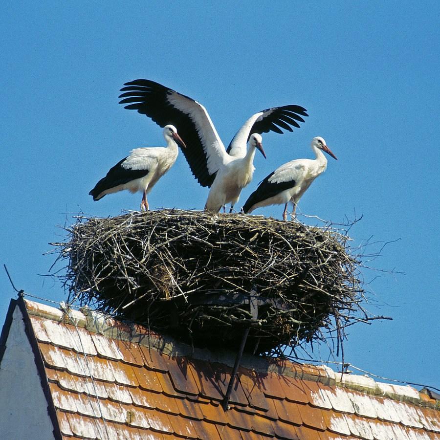 Гнездо для аиста своими руками. Как сделать гнездо для аиста 46