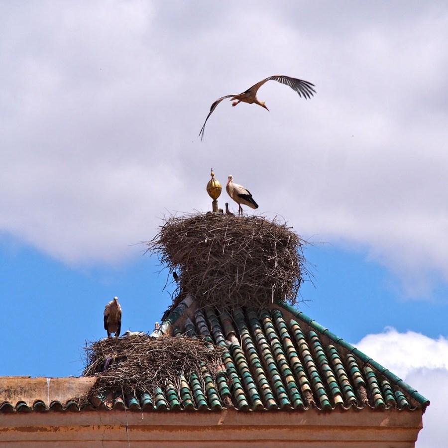 Как изготовить гнездо для аиста своими руками
