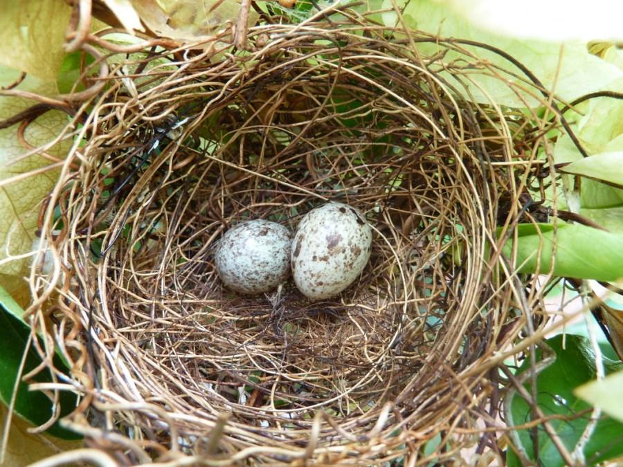 Как сделать птичьего гнезда 182
