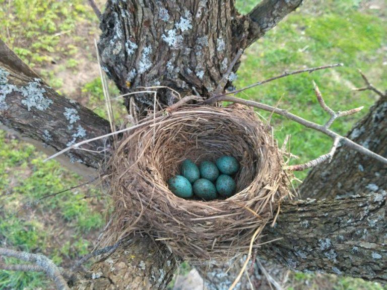 Как сделать гнездо из веток своими руками фото