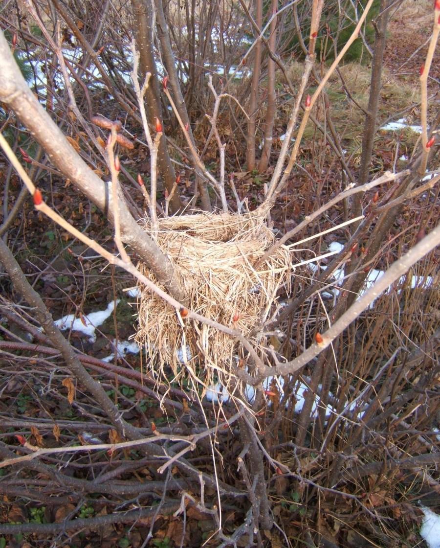 Как сделать гнездо аиста из веток 585