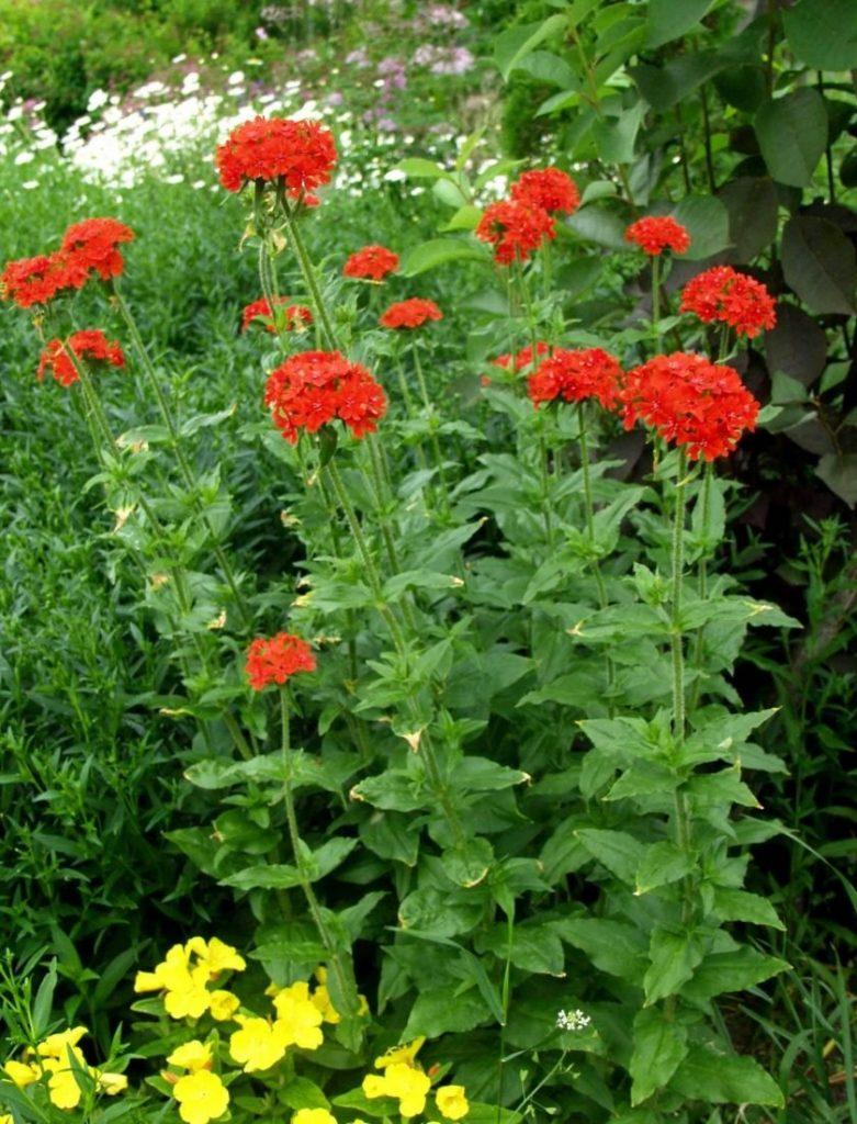 Фото высокорослых цветов с названиями