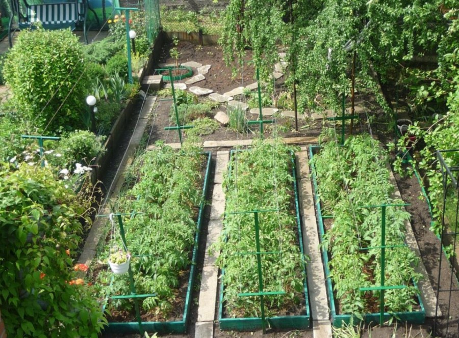 Схема огорода 4 сотки где что сажать фото 99