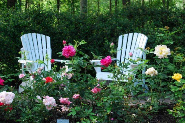 Секреты выращивания роз на даче 41