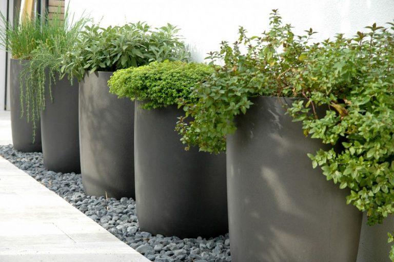 Выращивание уличных растений в горшках 12