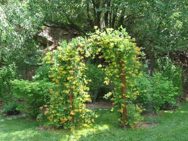 Лианы для сада - многолетние и морозостойкие растения для украшения сада