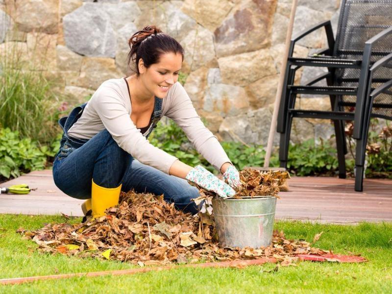 Какие работы можно проводить в саду и огороде в конце дачного сезона
