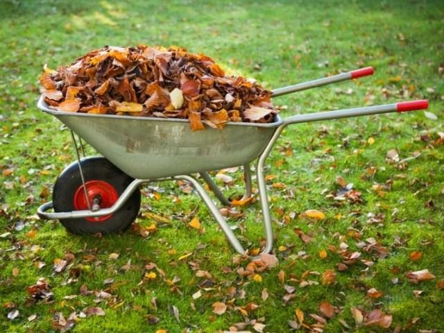 Конец дачного сезона – работы в саду и огороде