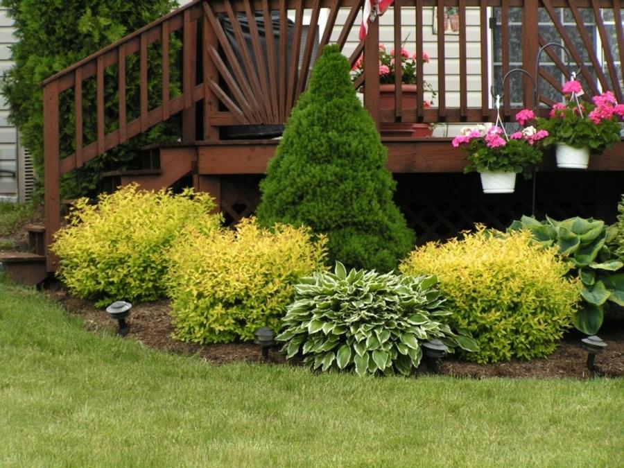 как сажать кустарники
