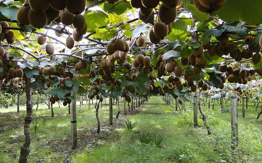 какие деревья не рекомендуется высаживать осенью