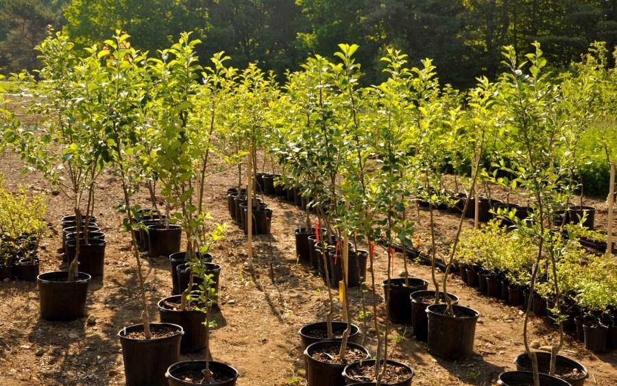 деревья посадка