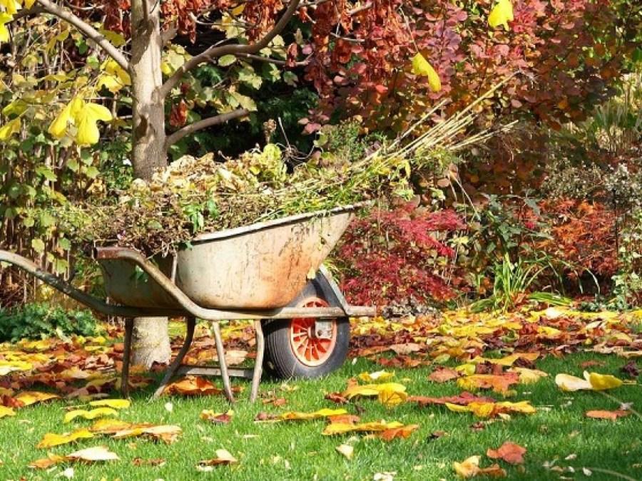 посадка кустарников осенью