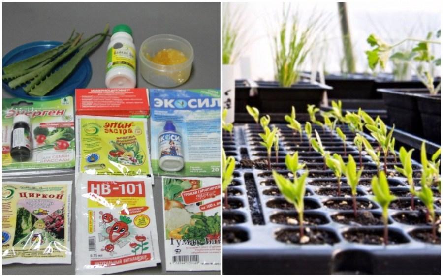 стимулятор роста для смородины