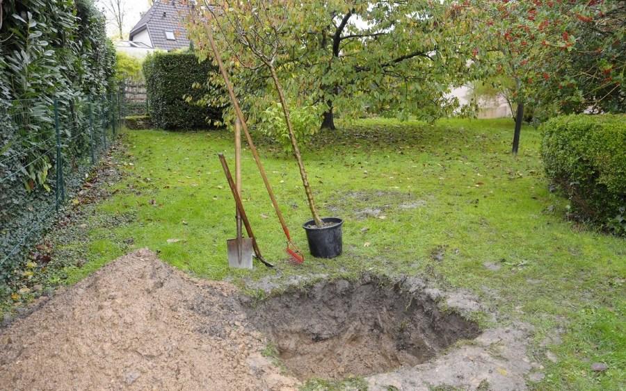 подготовка ямы к посадке деревьев