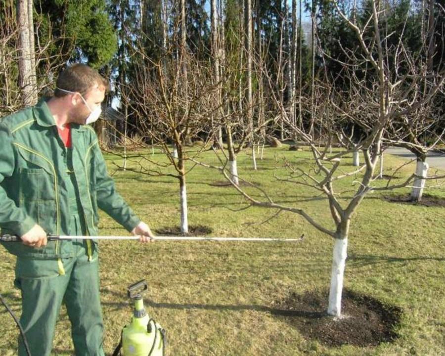 опрыскивание деревьев от вредителей
