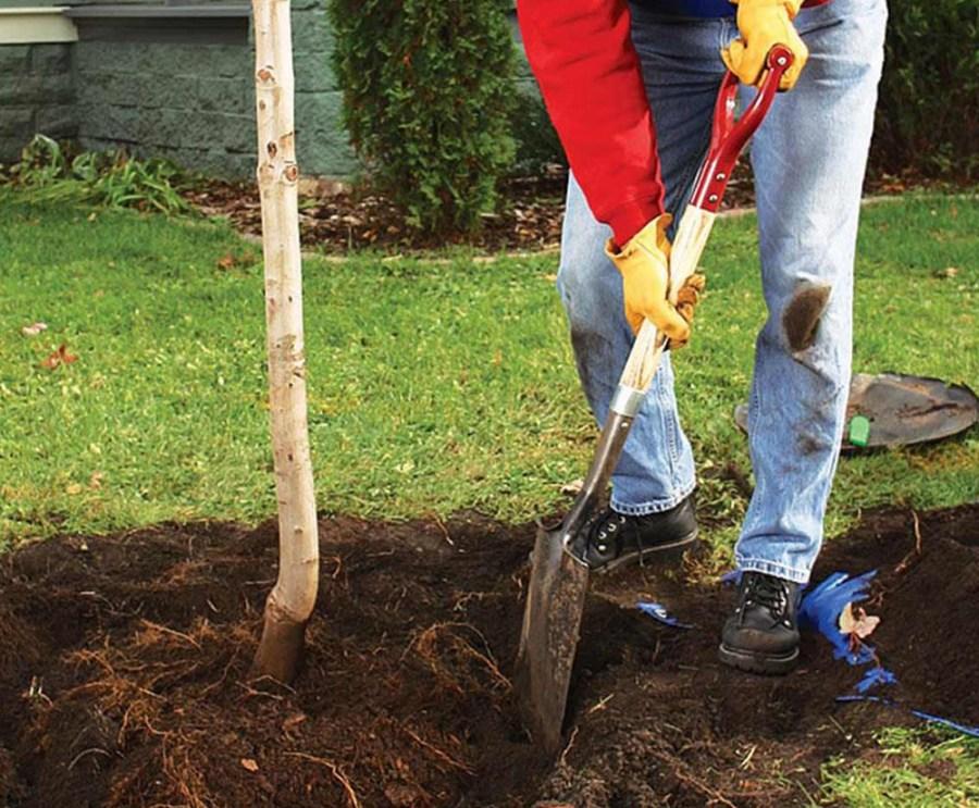 подготовка ямы для посадки кустарников