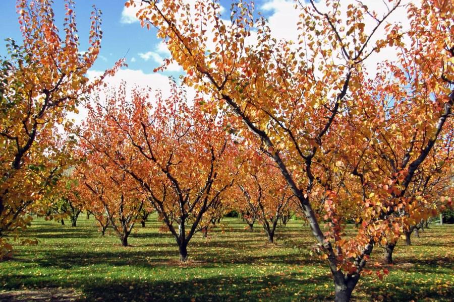 уход за деревьями в октябре